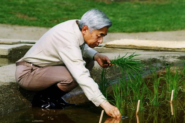 Ázijské dohazování služby NYC farma Zoznamka webové stránky